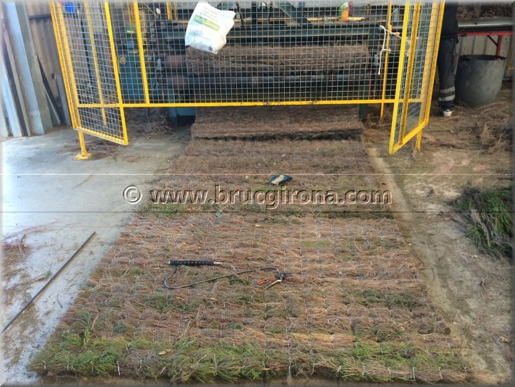 Fabricación de brezo natural Girona para vallas, ocultaciones y parasoles